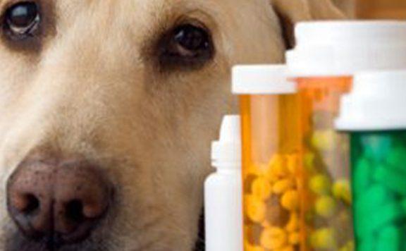 Knuffelen met huisdier als remedie