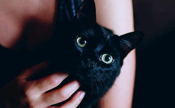 Knuffel geeft kat stress
