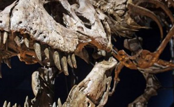 Tyrannosaurus Rex knuffelen